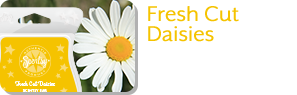 Fresh Cut Daisies.
